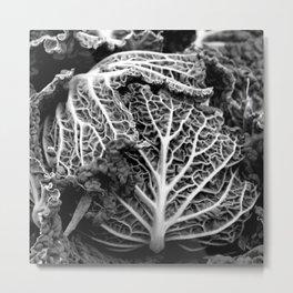 Napa Cabbage 5 Metal Print