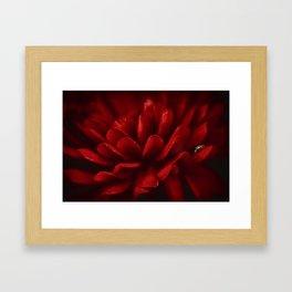 Red on Red Framed Art Print