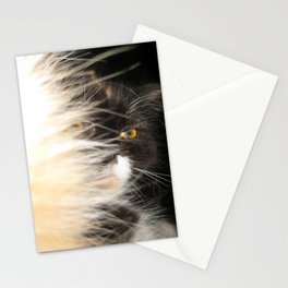 Fluffy Calico Cat Stationery Cards