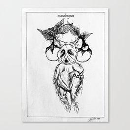 mandragora. Canvas Print