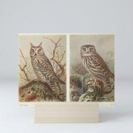 Scops Owl Little Owl4 Mini Art Print