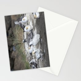 Gannet Family Stationery Cards