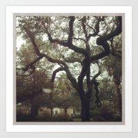 Singing Oaks on Esplanade. Art Print