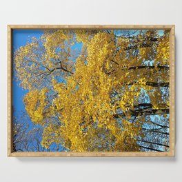 Golden fall maple trees and leaves Serving Tray