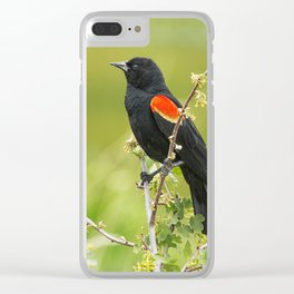 Red-winged Blackbird Clear iPhone Case