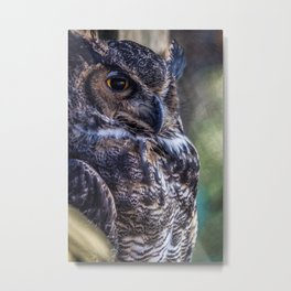 Great Horned Owl at the Toronto Zoo Metal Print