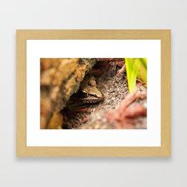 Frog Hide Out Framed Art Print