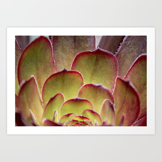 Succulent Art Print