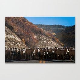 Sheep Street.  Canvas Print