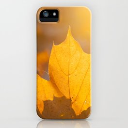 fallen leaves of a maple iPhone Case