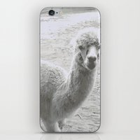 llama iPhone & iPod Skins featuring Llama by Cat In The Sorting Hat