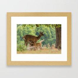 Spring Dear Framed Art Print