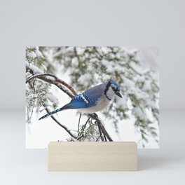 Beautiful Blue Jay Mini Art Print