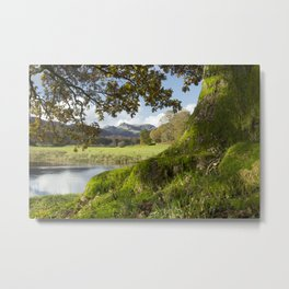Oak tree, River Brathay and Langdale Pikes beyond. Elterwater, Lake District, UK in Autumn. Metal Print