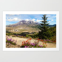 Mt. St. Helens wildflowers Art Print