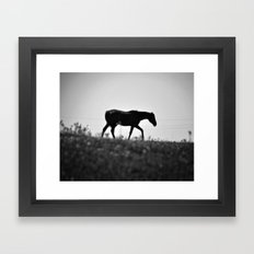 Horse with no name... Framed Art Print