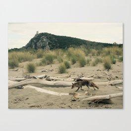 Maremma Volpe- wild fox Canvas Print