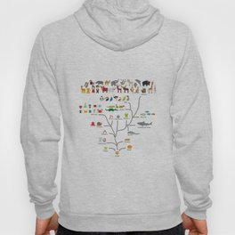 Evolution scale from unicellular organism to mammals. Evolution in biology, scheme evolution Hoody