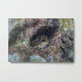 Octopus Hiding Metal Print