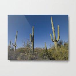 Carol M Highsmith - Saguaro Cactus near Tucson, Arizona 3 Metal Print