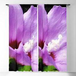 Rose Of Sharon A Summer Bloom Blackout Curtain