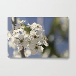 Spring Pear Blossum Metal Print