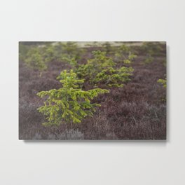 Little Evergreen Metal Print