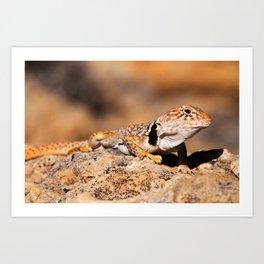 Great Basin Collared Lizard - Burr Trail, Utah Art Print
