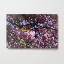 brooklyn botanical garden - cherry blossom Metal Print