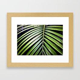 Palm IV Framed Art Print