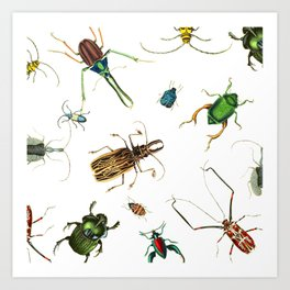 Bug Life - Beetles - Bugs - Insects - Colorful - Insect Pattern Art Print