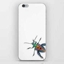 Frog-legged Beetle... Oh-so-shiny! iPhone Skin