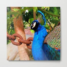 Peacock at Fountain of Youth Metal Print