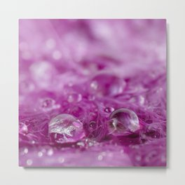 Drops in feathers Metal Print
