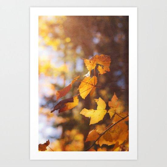 sun soaked autumn Art Print