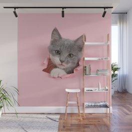 Gray Kitten Wall Mural