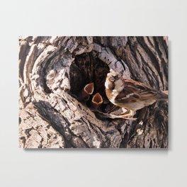 House Sparrow Keeping House Metal Print