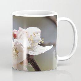 Apricot Tree Bloom Coffee Mug
