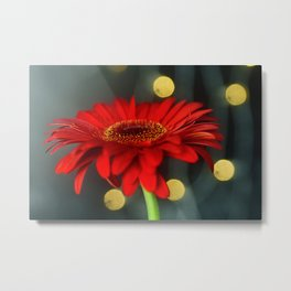 Red Transvaal Daisy, Gerbera Flower - Original Botanical Nature Photography - Flora Art  Metal Print