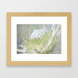 Regal Beauty Framed Art Print