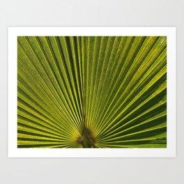 Green Plam Leaf Art Print
