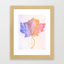 Fall Colors 2 Framed Art Print