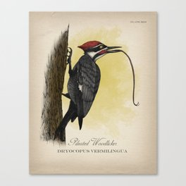 Pileated Woodlicker Canvas Print