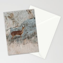 Steenbok Stationery Cards