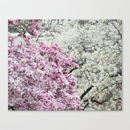 Pink and white 2 Canvas Print