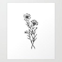 Cosmos Wildflower Art Print