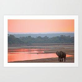 Walk in the evening light, Africa wildlife Art Print