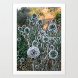 Seed Head Of Leek Flower Allium Sphaerocephalon  Art Print