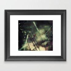 Biedronka....Ladybug Framed Art Print