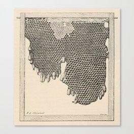 Honeycomb Frame Canvas Print
